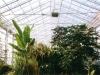 Tropenhaus 2